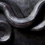 Indigo-Snake